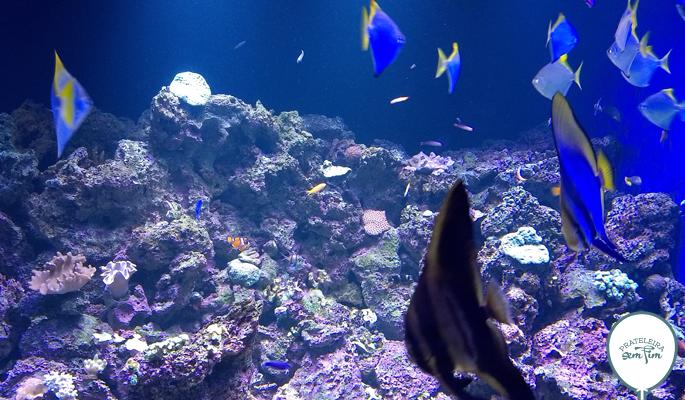 Achou o Nemo?